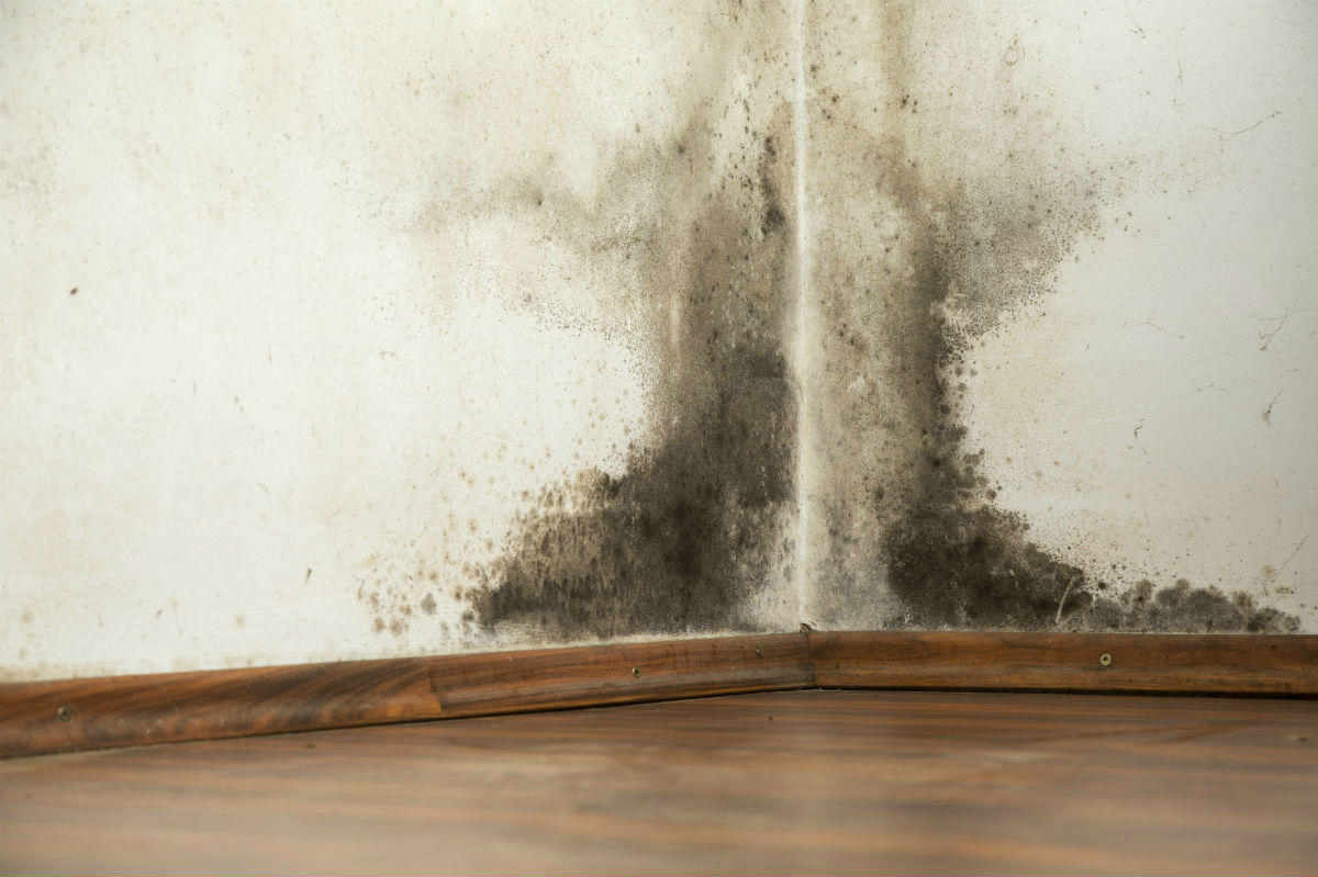 mold problem in St. Louis